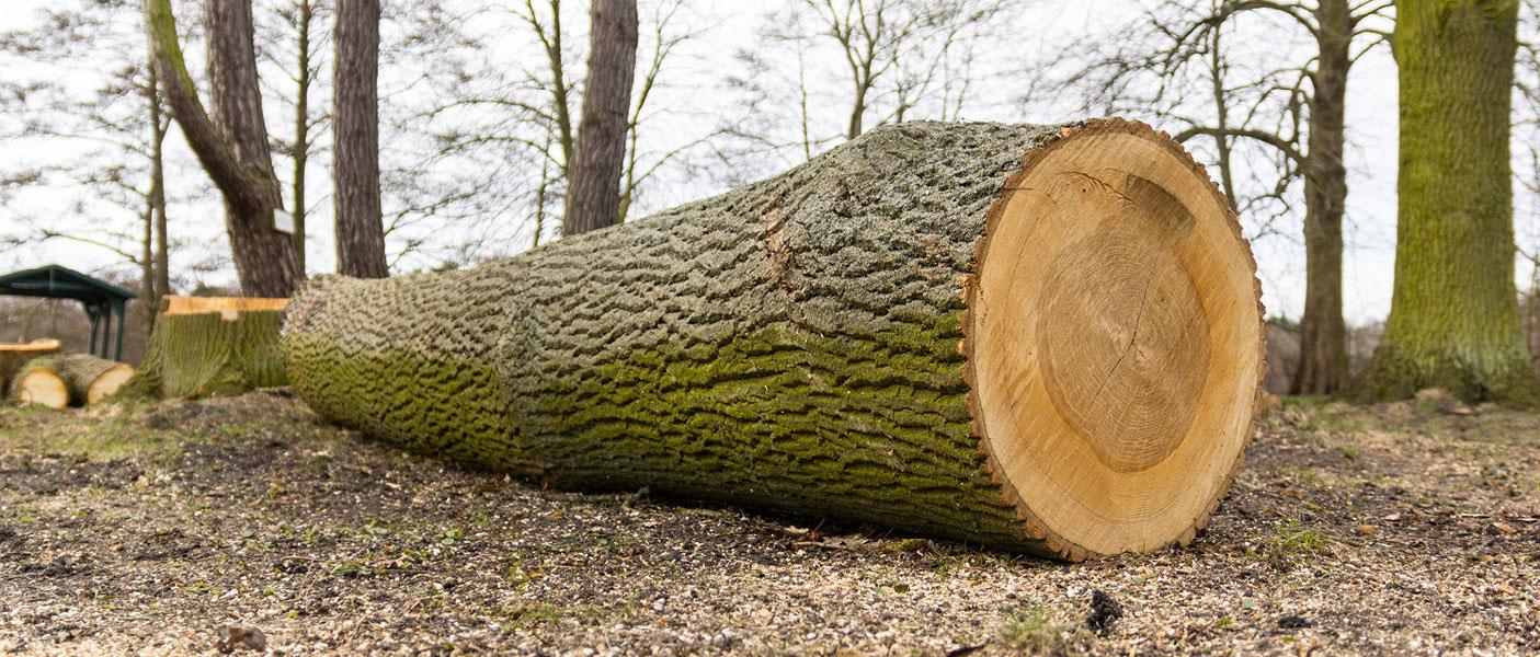 Baumfällungen sind ein Spezialgebiet, welches wir in der Forstdienstleistung anbieten.