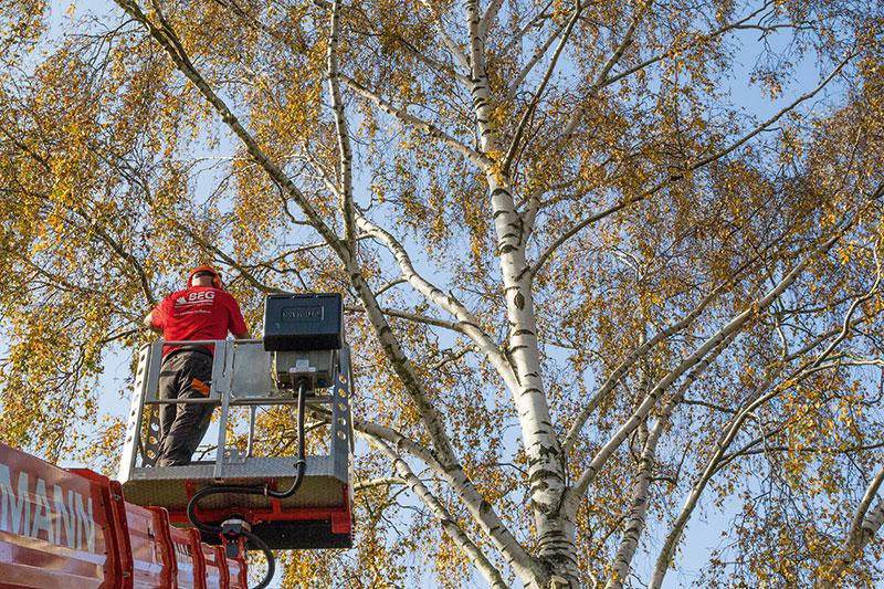Begutachtung von Bäumen gehört zu unserem Angebot in der Baumpflege.