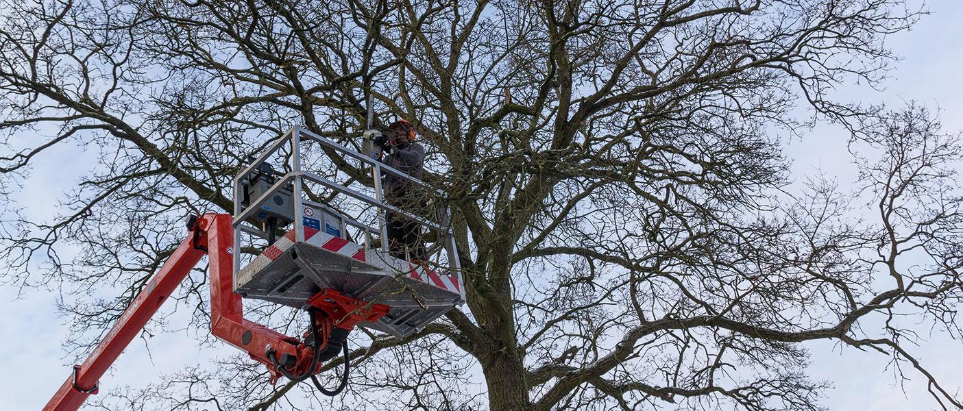 Lichtraumprofil schneiden gehört zu unseren Angebot in der Baumpflege.