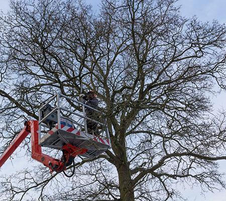 Ausästen mit Hilfe einer Hebebühne, in der Forstdienstleistung gehört die Baumpflege unmittelbar dazu.