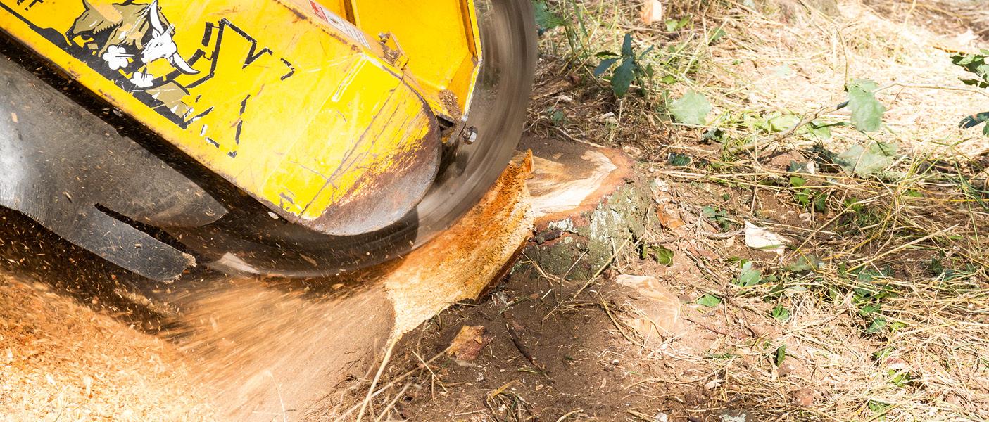Baumwurzel entfernen mit einer Stubbenfräse.