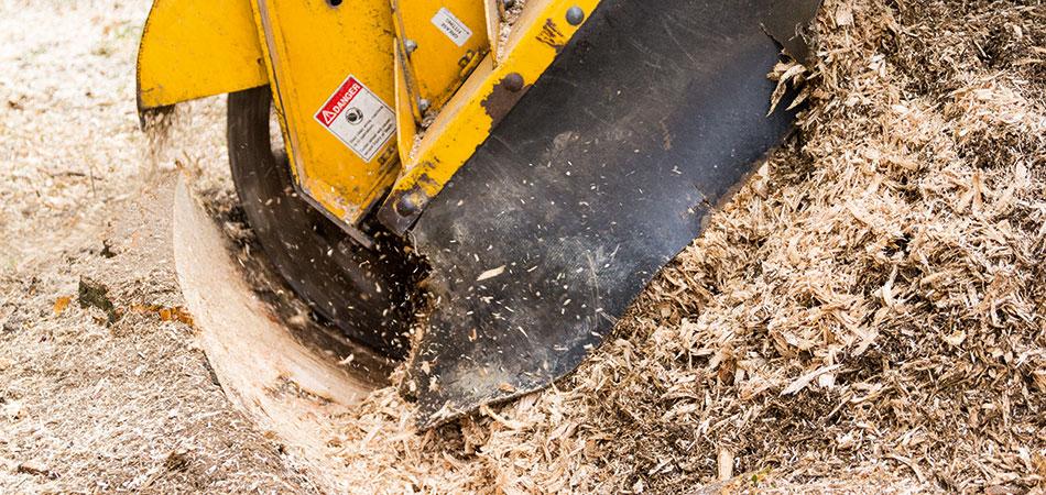 Baumwurzel entfernen mit unserer Stubbenfräse bis zu einer Tiefe von 80cm.