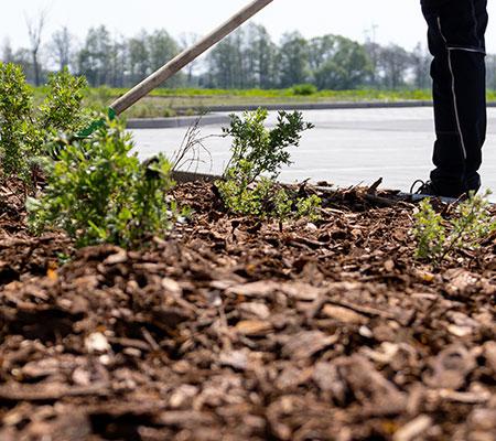 Das Bild zeigt die Pflege von Beeten, eine wiederkehrende Aufgabe in der Gartenpflege.