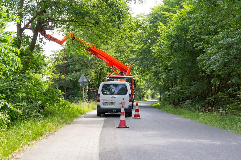 Professionelle Baumpflege an öffentlichen Straßen.